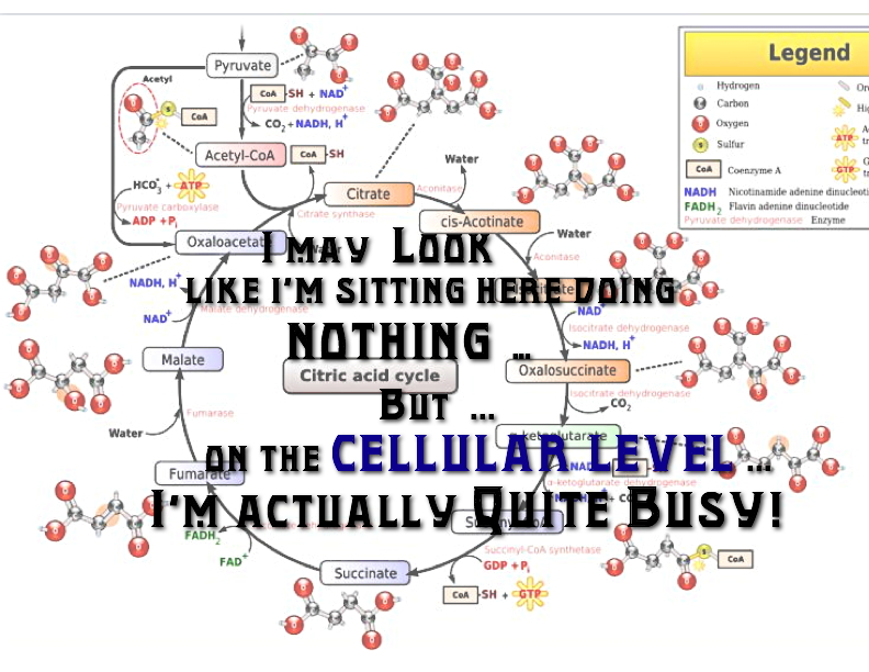 THE_CELLULAR_LEVEL